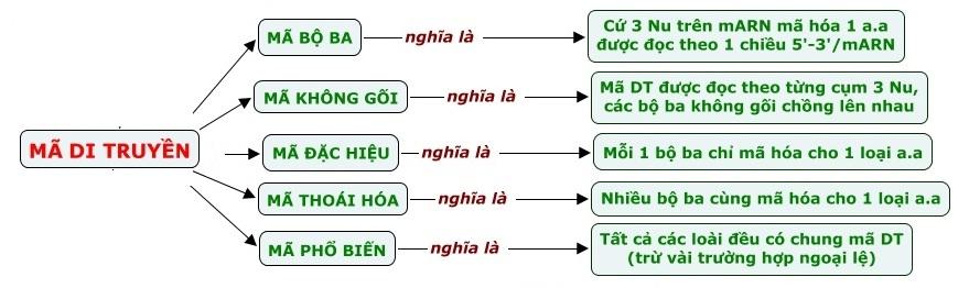 Hình 1: Đặc điểm của mã di truyền