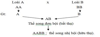 Hình 2. Cơ chế phát sinh thể dị đa bội