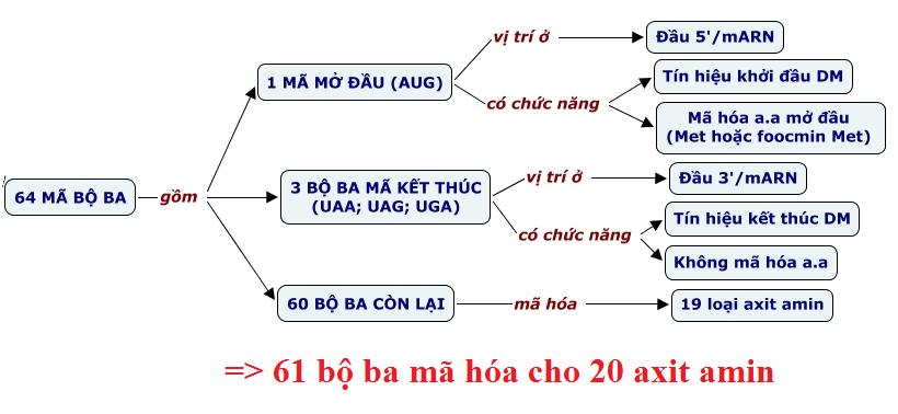 Hình 2: Chức năng của các bộ ba trong mã di truyền