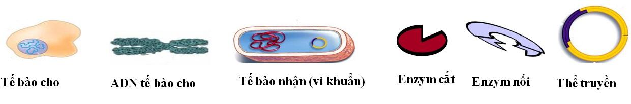 Hình 1. Các thành phần tham gia vào quy trình tạo ADN tái tổ hợp