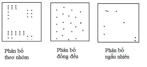 Hình 2. Các kiểu phân bố của cá thể trong quần thể
