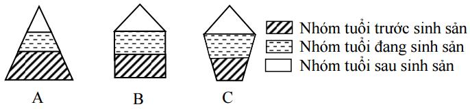 Hình 1 : Các dạng tháp tuổi đặc trưng trong quần thể