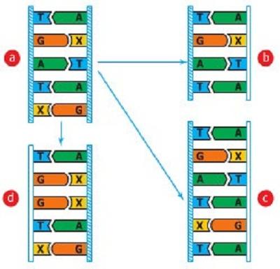 Các dạng đột biến gen