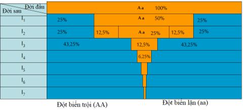 Tỷ lệ các kiểu gen qua các thế hệ tự thụ phấn