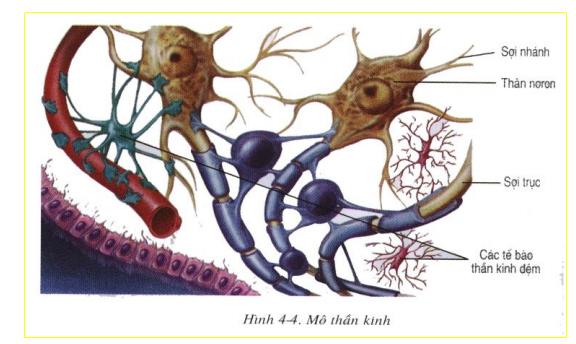 Mô thần kinh