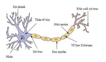 nơron