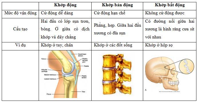 Các khớp xương