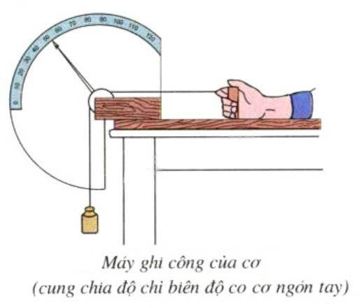 Tính công cơ ngón tay bằng máy ghi công của cơ