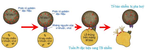 tế bào độc