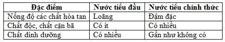 so sánh nước tiểu đầu và nước tiểu chính thức