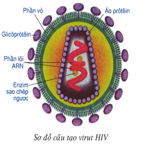 virut HIV