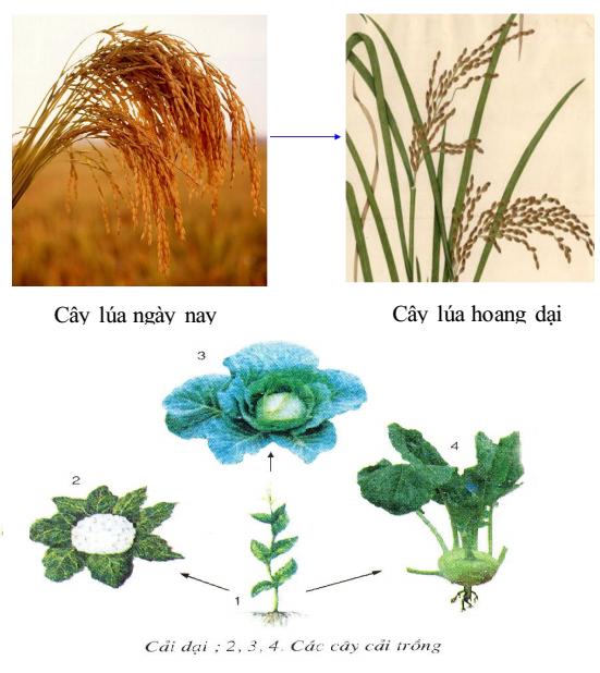 cây trồng và cây dại