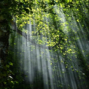 Tập đọc: Kì diệu rừng xanh