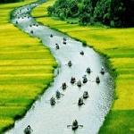 Chính tả: Dòng kinh quê hương; Kì diệu rừng xanh; Luyện tập đánh dấu thanh iê/ia, yê/ya