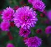 Chính tả: Bông hoa Niềm Vui