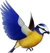 Tập đọc: Chim sơn ca và bông cúc trắng