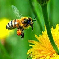 Tập đọc: Hành trình của bầy ong