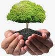 Tập làm văn: Đáp lời chia vui. Tả ngắn về cây cối