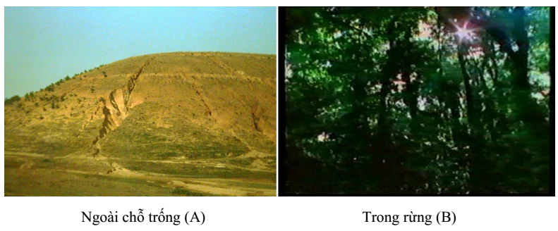 đất trống và rừng cây