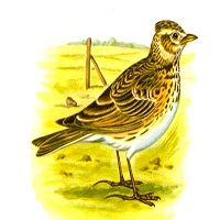 Tập đọc: Con chim chiền chiện