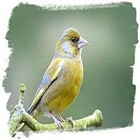 Chính tả: Nghe lời chim nói; Phân biệt l/n, thanh hỏi/thanh ngã
