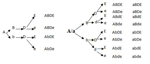 Xác định các loại giao tử của có kiểu gen AABbDDEe và AaBbDdEe