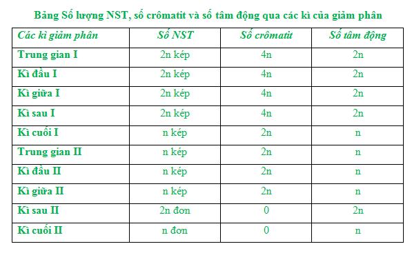 Bảng Số lượng NST, số crômatit và số tâm động qua các kì của giảm phân
